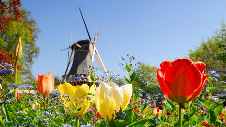/excursion-image/amsterdam-netherlands/amsterdam-tulips-the-keukenhof-gardens/032203_130401031323.jpg