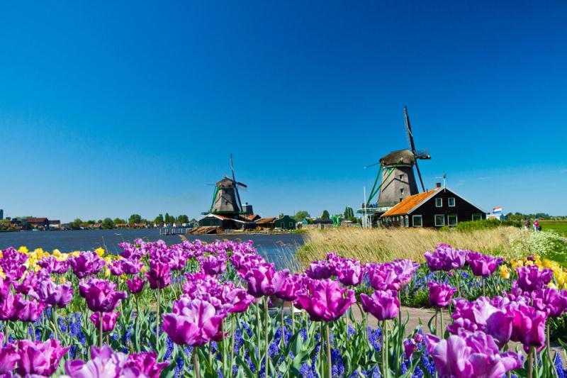 /excursion-image/amsterdam-netherlands/yearround-amsterdam-flower-tourgroup-tour/032249_130702044400.jpg