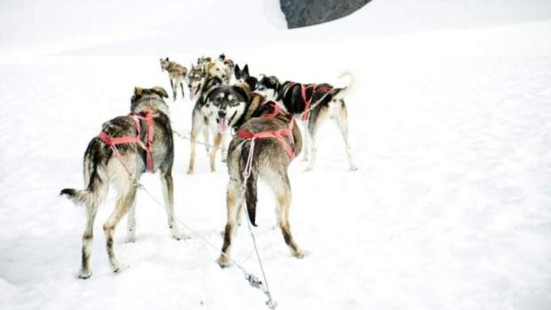 /excursion-image/anchorage-alaska/helicopter-ride-with-authentic-dog-sledding/093594_140411112326.jpg