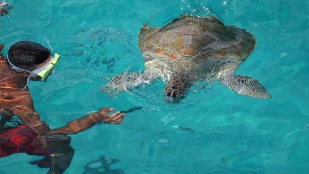 /excursion-image/barbados/sea-turtle-snorkel-plus-lunch/056436_110913101314.jpg