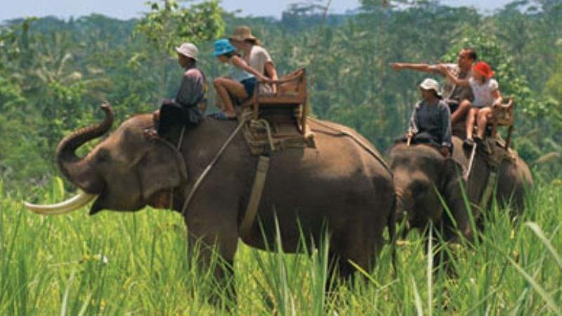 Elephant Safari - Elephant Safari. Copyright ShoreTrips.com.