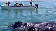 /excursion-image/cabo-san-lucas-mexico/a-day-at-the-whale-sanctuary-one-step-beyond-the-usual/001136_111114113013.jpg