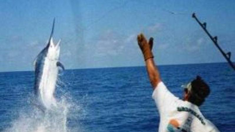 Deep sea fishing cancun mexico caribbean central for Deep sea fishing mexico