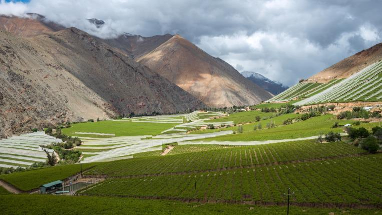 Private: Pisco, Poets And The Elqui Valley - Private: Pisco, Poets And The Elqui Valley. Copyright ShoreTrips.com.
