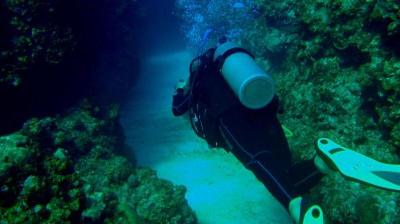 /excursion-image/costa-maya-mahahual-mexico/1tank-dive-for-certified-divers/068920_120203114428.jpg