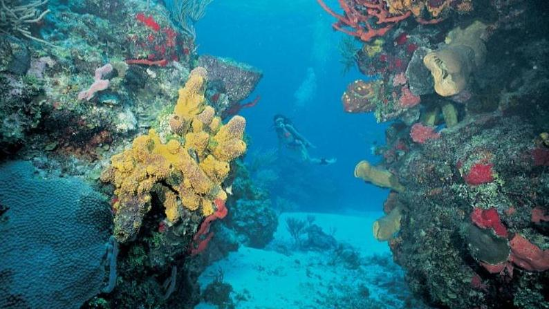 /excursion-image/costa-maya-mahahual-mexico/2tank-dive-for-certified-divers/068765_120210011006.jpg