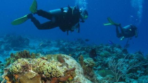 /excursion-image/cozumel-mexico/scuba-two-tank-reef-dive-for-certified-divers/010825_111026044934.jpg