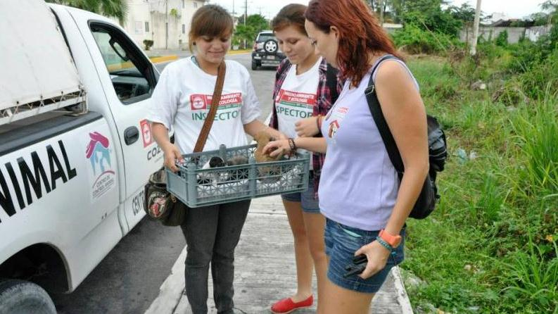 /excursion-image/cozumel-mexico/shoretrips-give-animal-assistance-and-care/101873_131107102228.jpg