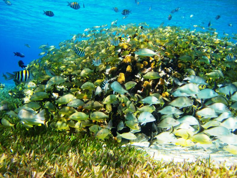 /excursion-image/cozumel-mexico/snorkel-the-famous-palancar-and-columbia-reefs/102023_150102121949.jpg