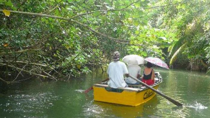Indian River Boat Tour Dominica