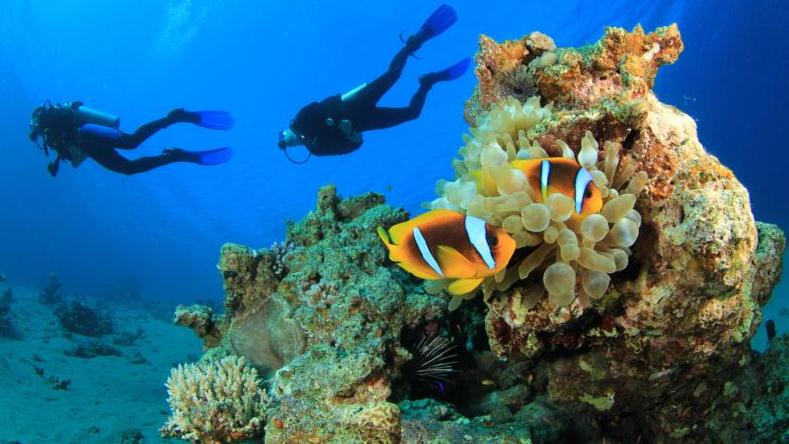 /excursion-image/dominica-roseau/scuba-two-tank-dive/032254_130213121406.jpg