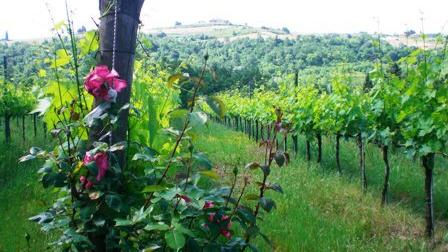 /excursion-image/florence-italy/chianti-tour-by-bike/013948_110902023634.jpg