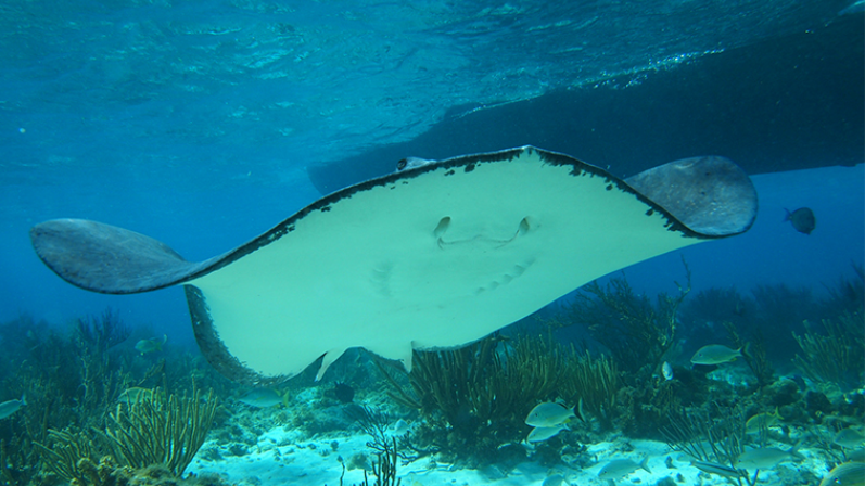 /excursion-image/grand-cayman-george-town/1-stop-stingray-city-poolside-lunch/114960_151109114756.png