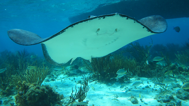 /excursion-image/grand-cayman-george-town/best-of-cayman-with-stingray-city-and-lunch/031891_140618121532.png