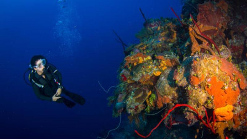 /excursion-image/grand-cayman-george-town/scuba-a-two-tank-dive-best-dive-in-the-caribbean/030830_160401112615.jpg