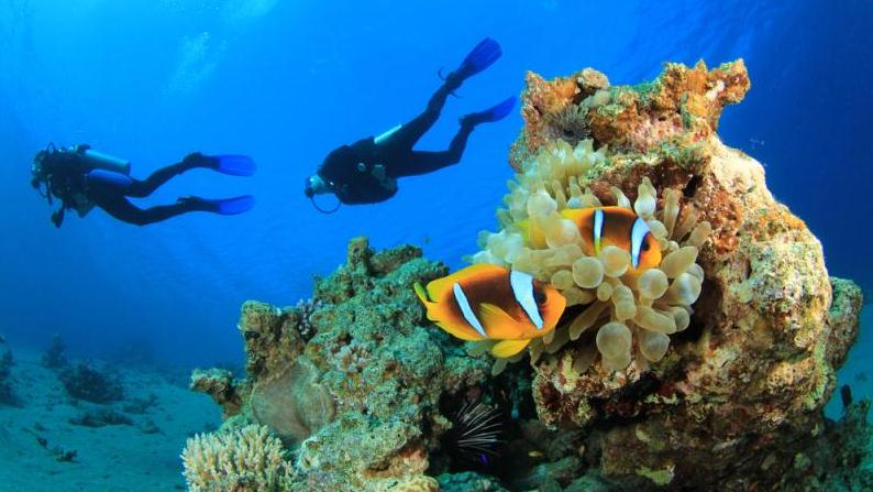 /excursion-image/grand-cayman-george-town/scuba-pair-of-certification-dives/007552_140619122509.jpg