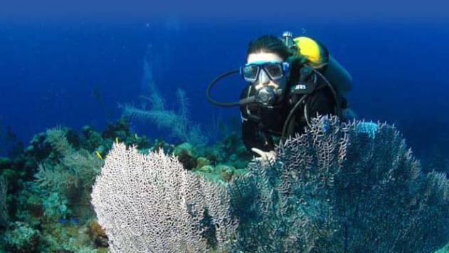 /excursion-image/grand-cayman-george-town/scuba-private-two-tank-dive-the-best-in-cayman/002212_140929120715.jpg