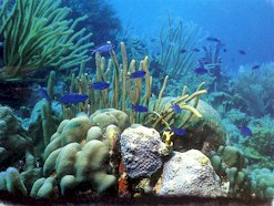 /excursion-image/grenada/scuba-a-pair-of-certification-dives/030658.jpg