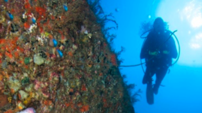 /excursion-image/grenada/scuba-two-tank-dive/100700_141104122433.png