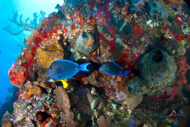 /excursion-image/guadeloupe-fwi/pigeon-island-snorkel/076868_130627045327.jpg