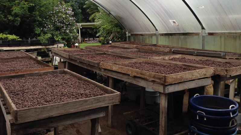 /excursion-image/hilo-hawaii/private-hawaii-chocolate-and-coffee-plantation-tour/114301_151015122058.jpg