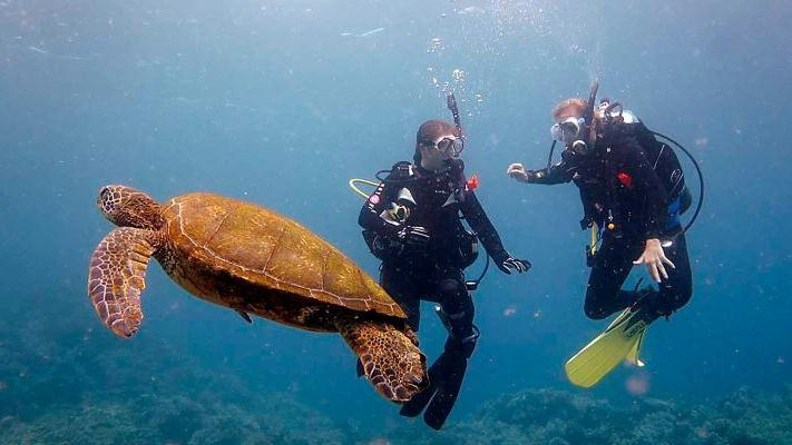 /excursion-image/hilo-hawaii/scuba-one-tank-dive-for-certified-divers/115329_151112100235.jpg
