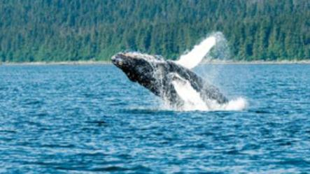 /excursion-image/juneau-alaska/whale-watching-tour-by-private-boat/139455_111031043045.jpg