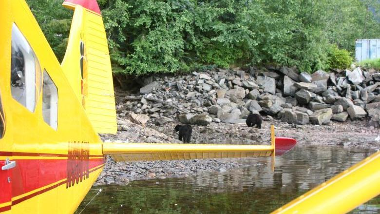/excursion-image/ketchikan-alaska/bear-viewing-black-bear-viewing-on-prince-of-wales-island/007386_120118120734.jpg