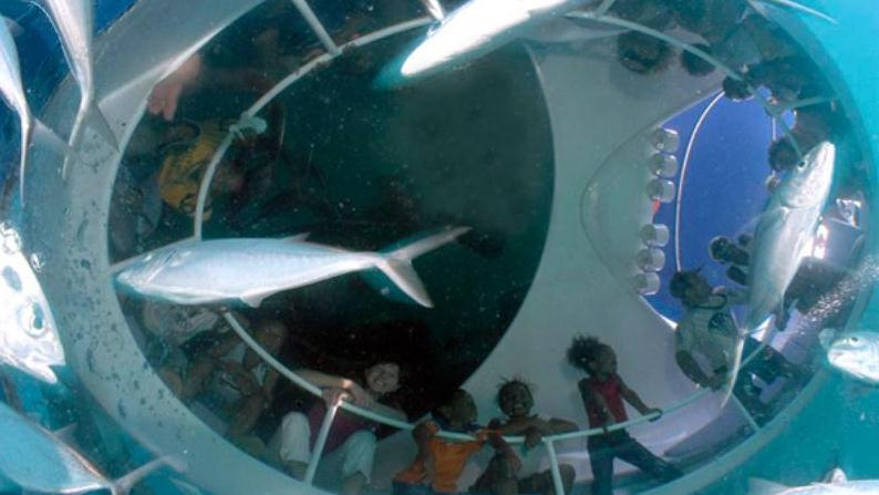 /excursion-image/key-west-florida/glass-bottom-dolphin-viewing-with-snorkel-adventure/082354_130424091610.jpg