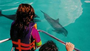 /excursion-image/key-west-florida/wild-dolphins-ecotour/000150_110908094840.jpg