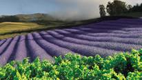 /excursion-image/maui-kahului-hawaii/haleakala-upcountry-day-and-lavender-garden-tour/004195_111114013803.jpg