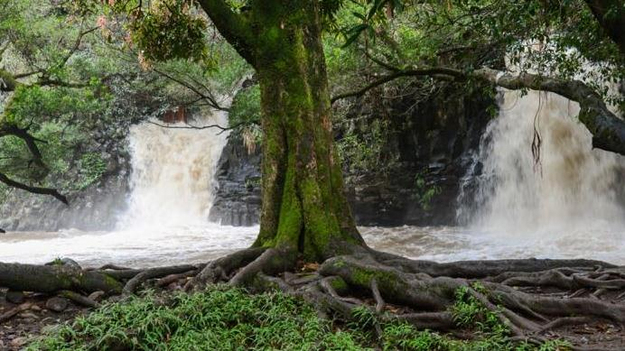 /excursion-image/maui-lahaina-hawaii/waterfall-walk-south-side-departure-hotel-guests-only/055727_141114120326.jpg