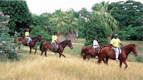 /excursion-image/montego-bay-jamaica/horseback-a-ride-for-the-disabled-rider/000743_110908115722.jpg