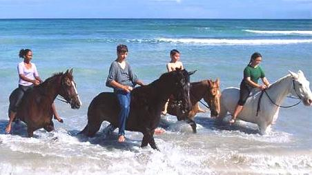 /excursion-image/montego-bay-jamaica/horseback-the-beach-ride/014589_110908014009.jpg