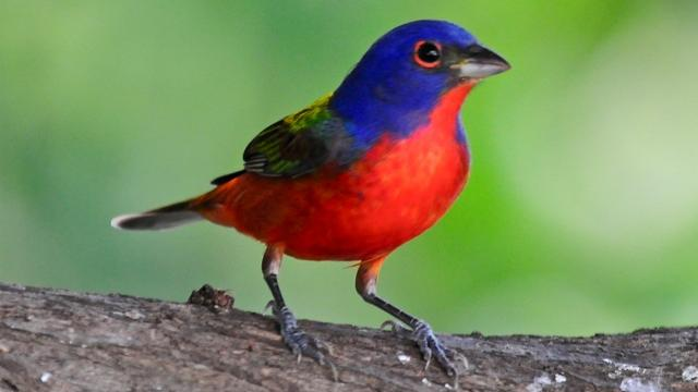 /excursion-image/nassau-bahamas/birding-in-bahamas/018729_110908015851.jpg