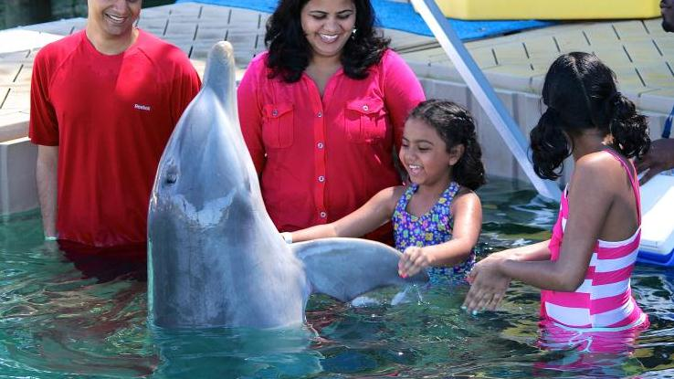 /excursion-image/nassau-bahamas/close-encounters-of-the-dolphin-kind/000703_150813034713.jpg