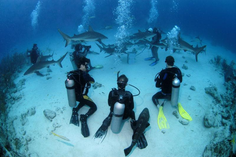 /excursion-image/nassau-bahamas/scuba-2tank-shark-dive/023133_140417021602.jpg