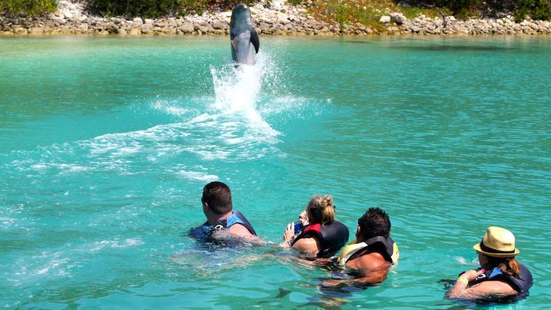 /excursion-image/nassau-bahamas/vip-adult-beach-with-best-dolphin-swim-combo/137660_150813035312.jpg