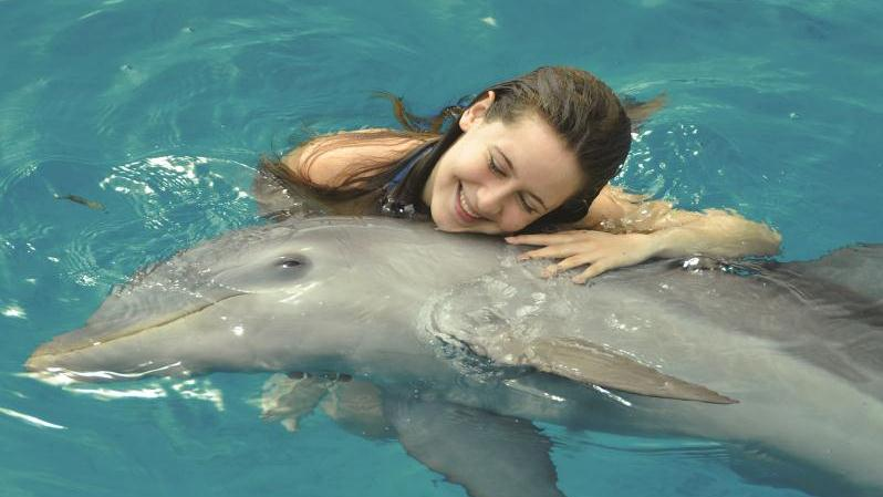 Dolphin Encounter In Punta Cana - Dolphin Encounter In Punta Cana - Hotel Guests Only. Copyright ShoreTrips.com.