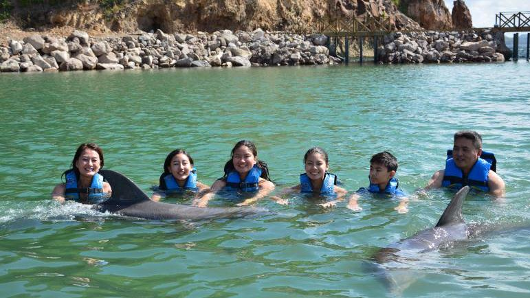 /excursion-image/st-kitts/dolphin-encounter-in-st-kitts/102372_150115103102.jpg