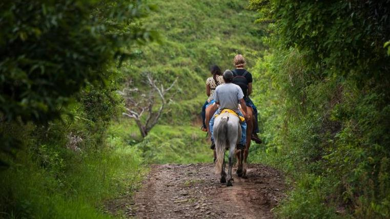 /excursion-image/st-kitts/horseback-ride-in-the-rainforest/000438_130304125912.jpg