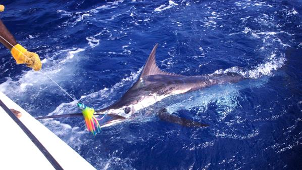 /excursion-image/st-lucia-castries/st-lucia-sports-fishing-individual-spaces/010877_110908012343.jpg