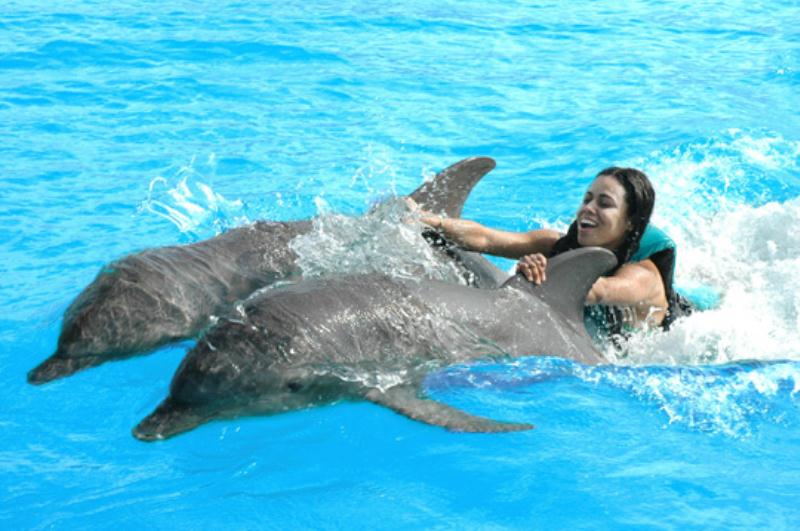 /excursion-image/st-martin-st-maarten/royal-dolphin-swim-anguilla/078388_130114123153.jpg
