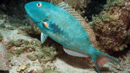/excursion-image/st-martin-st-maarten/scuba-a-pair-of-certification-dives/007856_110908011640.jpg