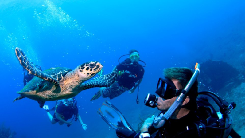 /excursion-image/tortola-bvi/scuba-introduction-class-followed-by-a-one-tank-dive/007650_151215111633.png