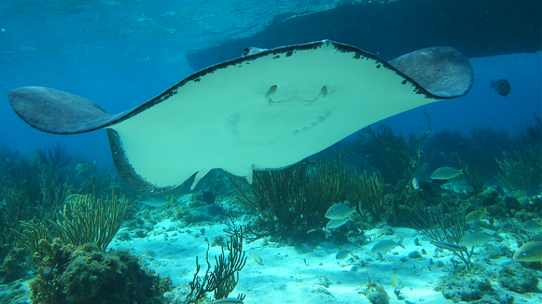 BEST OF CAYMAN WITH STINGRAY CITY AND LUNCH