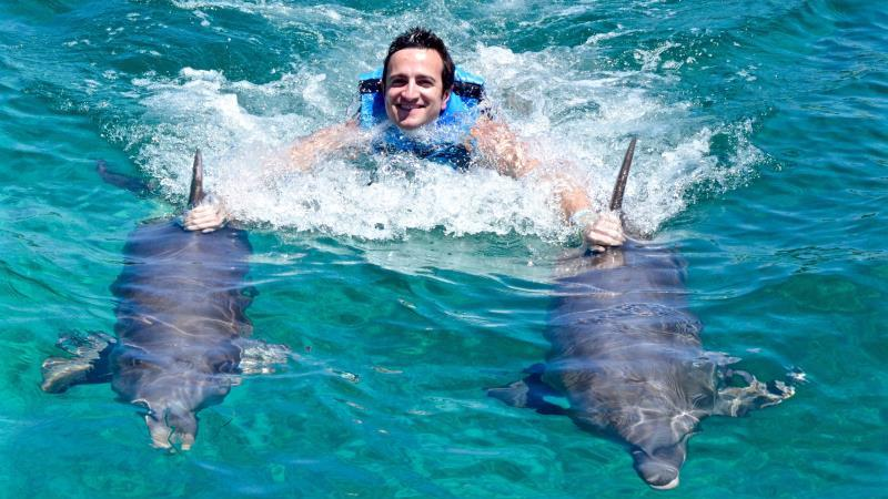 Images of dolphins swimming